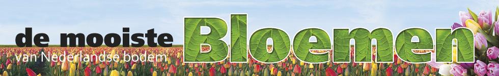 bloemen_header